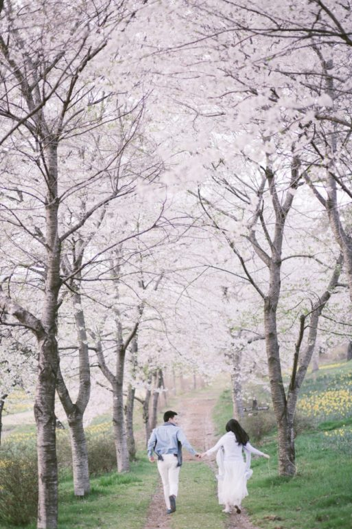 cherry blossoms in Japan hughs hue onethreeonefour 02